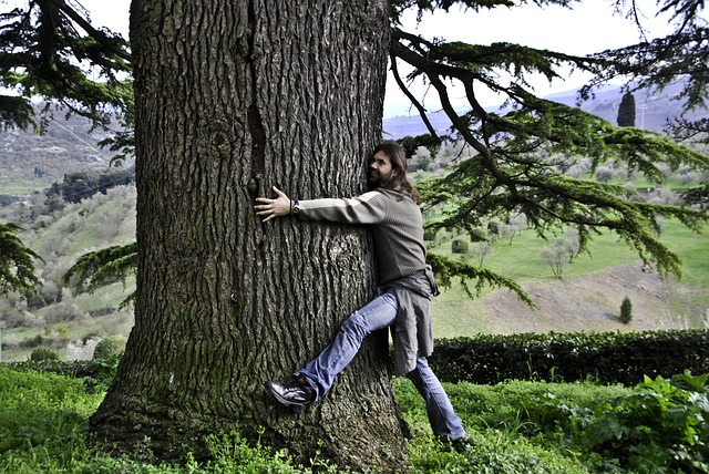 בחור מחבק עץ