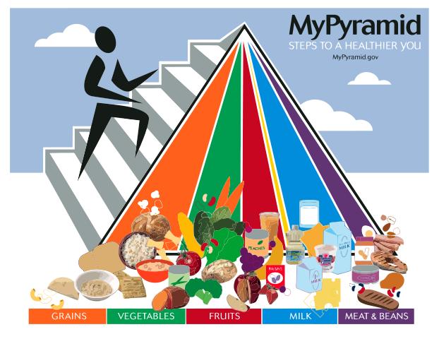 פירמידת המזון החדשה