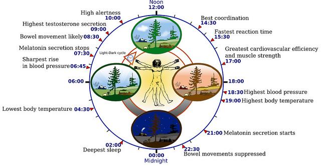 שעון ביולוגי