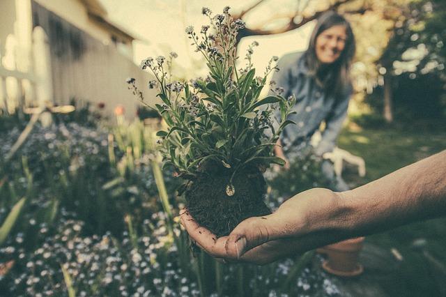 צמח לפני שתילה